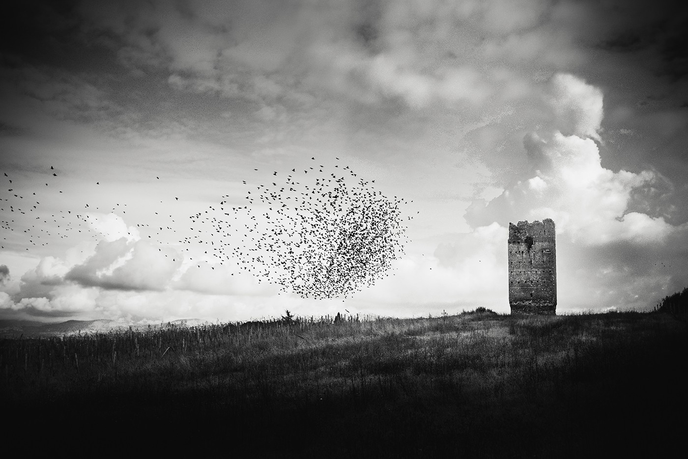 The Birds by Michelle Aschbacher