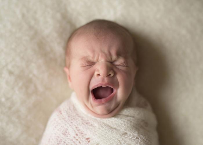 First Yawn by Samantha Covert