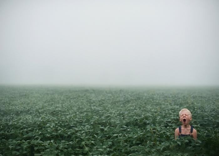 Foggy Morning by Beth Mancuso