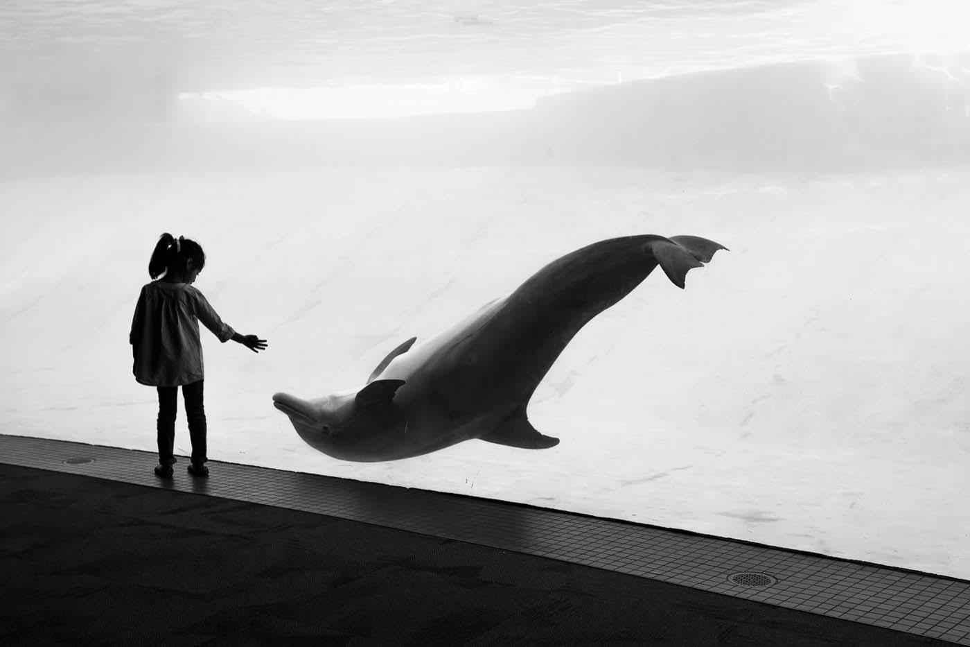 A Harmonious Encounter by Lindsay Moeser