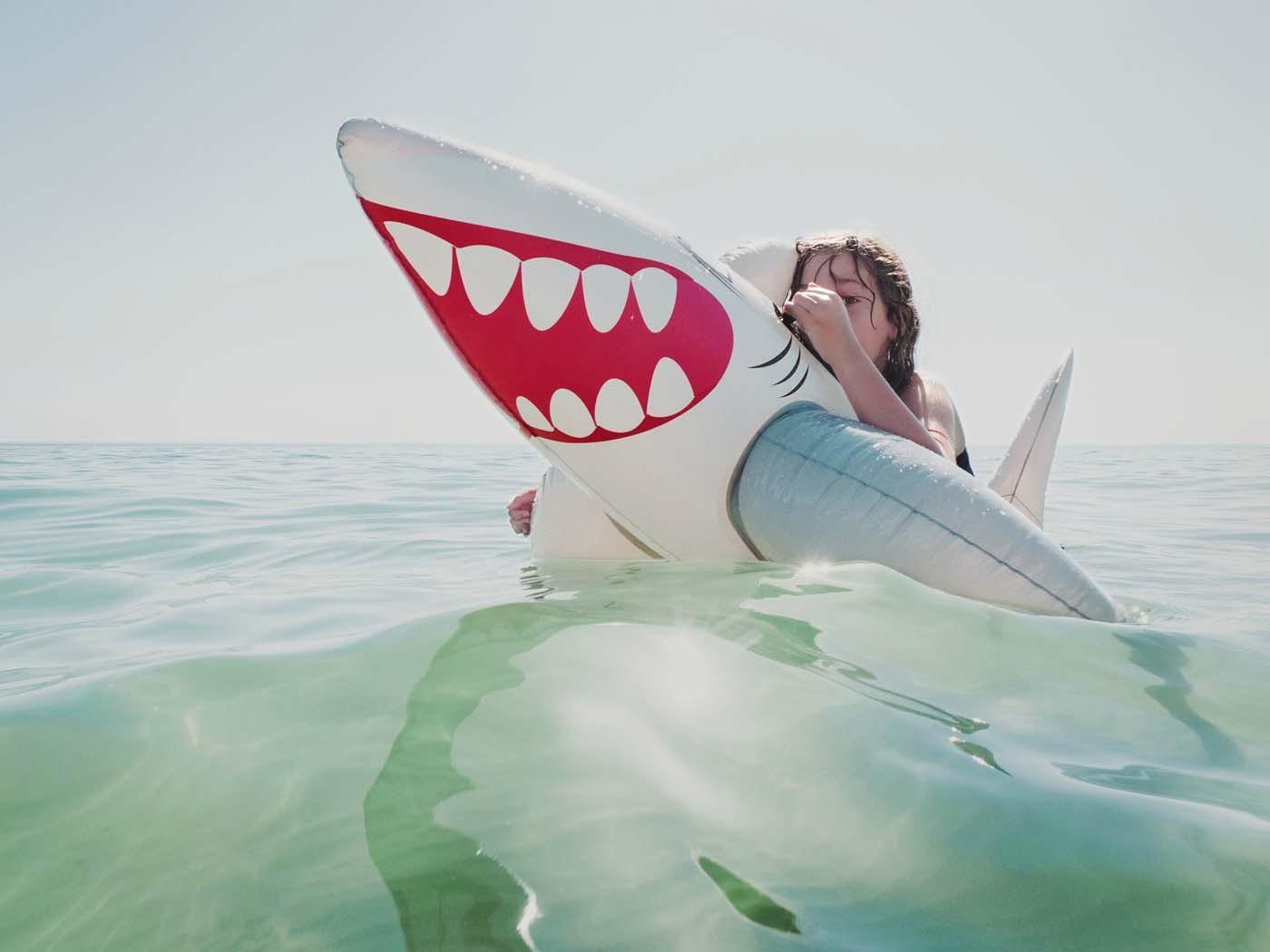 Shark by Rachel Devine