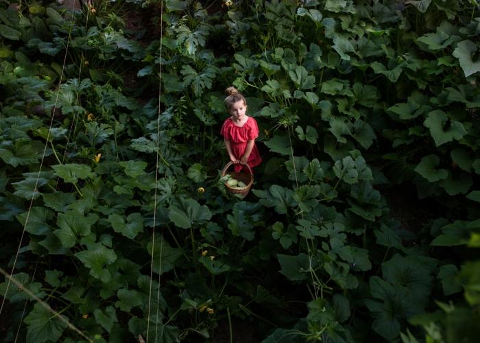 'Squash Garden' by Anna Christine Larson