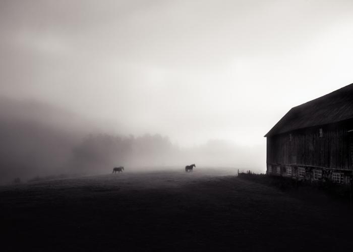 'September Mist' by Anda Panciuk