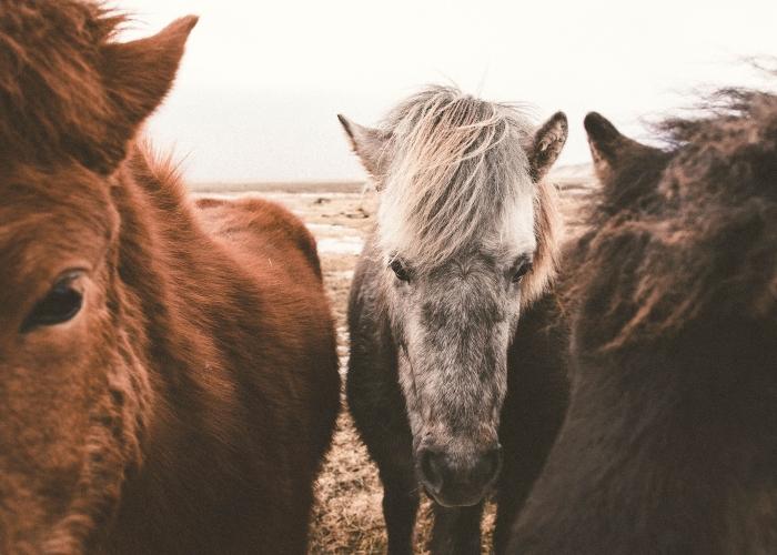 'Wild Horses' by Amanda Jean