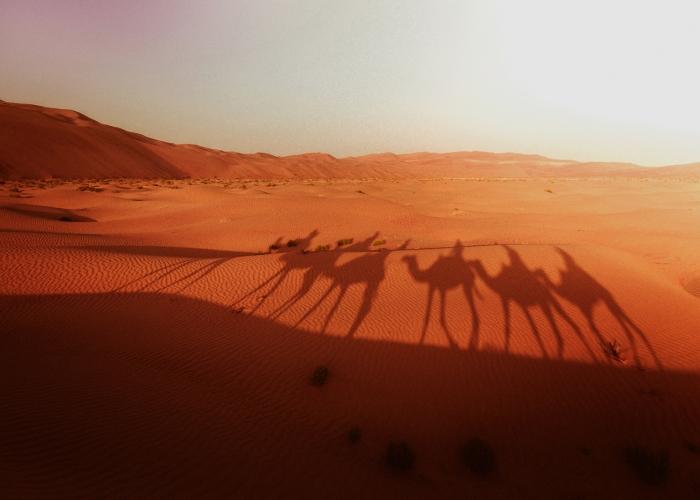 'A Walk in the Desert' by Dana Sharkey