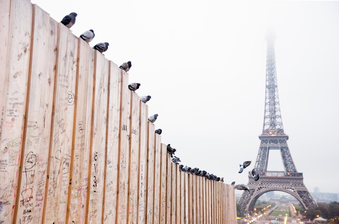 'Autumn Dawn in Paris' by Marissa Gifford