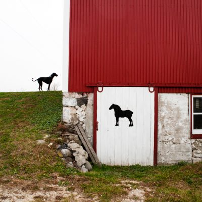 Great Dane & Horse | Red Barn Door Photo