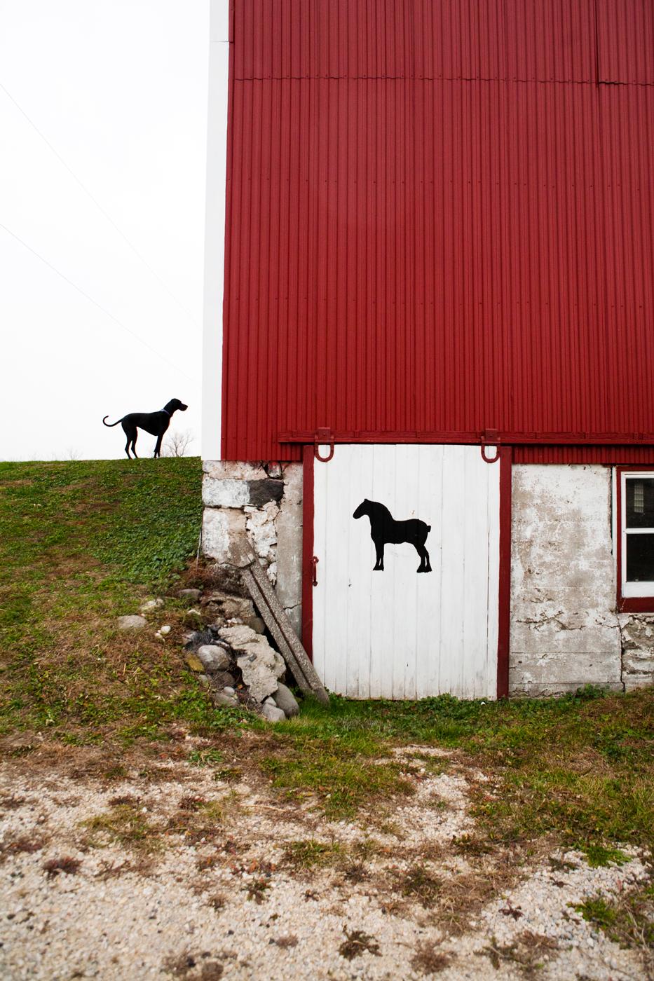 Great Dane & Horse   Red Barn Door Photo