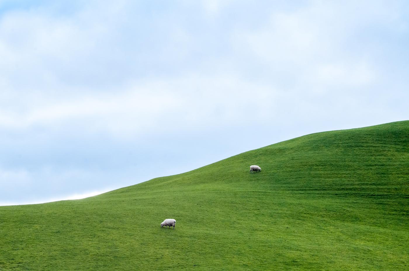 Downs_Emerald Hills