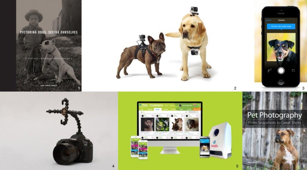 pet photography ideas