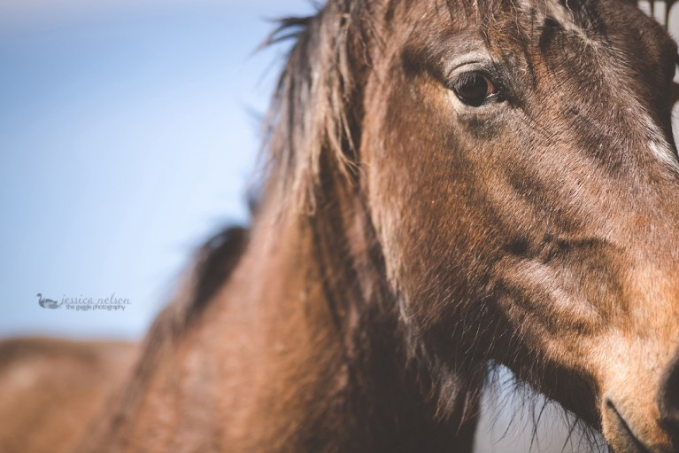 close up photo of horse by Jessica Nelson