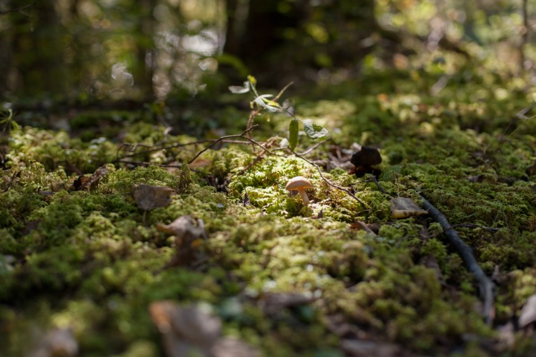 mushroom surrounded by grass in the woods by Charlaine Williams