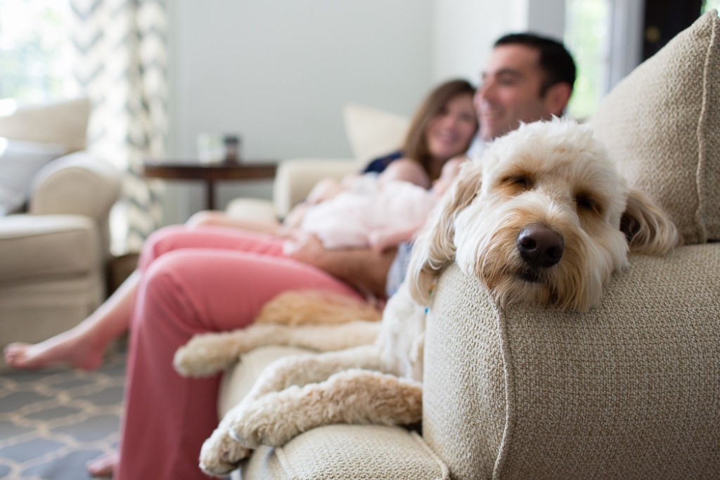 photo of a dobg sleeping on the couch by Jaye McLaughlin