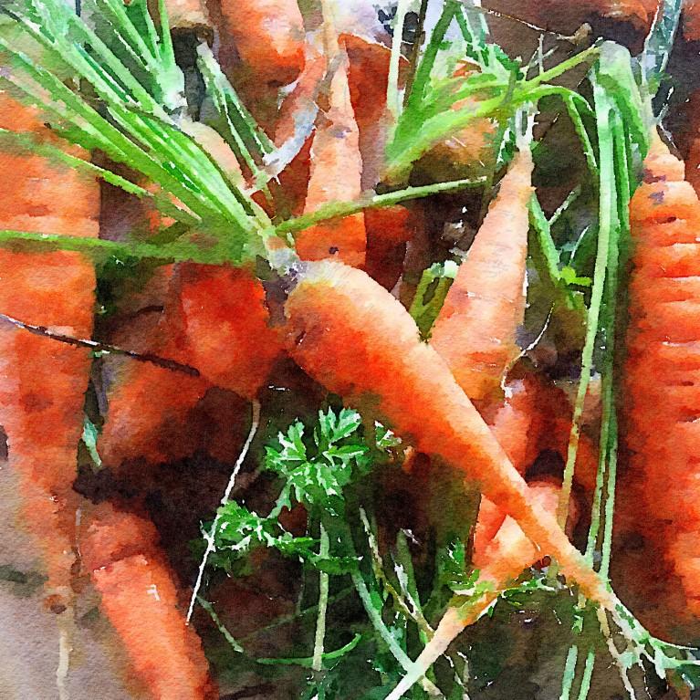 Waterlogue phone edit of carrots by Caroline Jensen