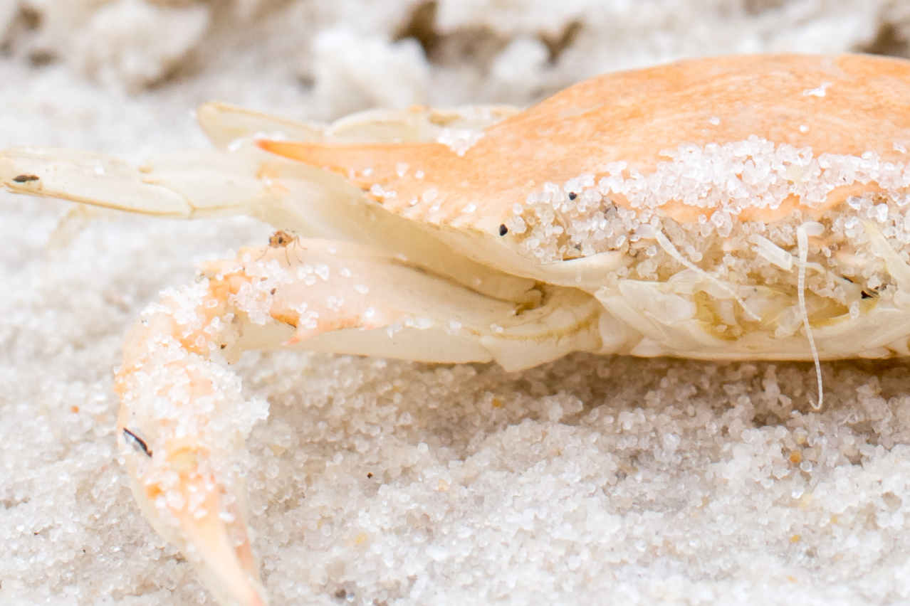 close up of crab by Jamie Campfield Bates