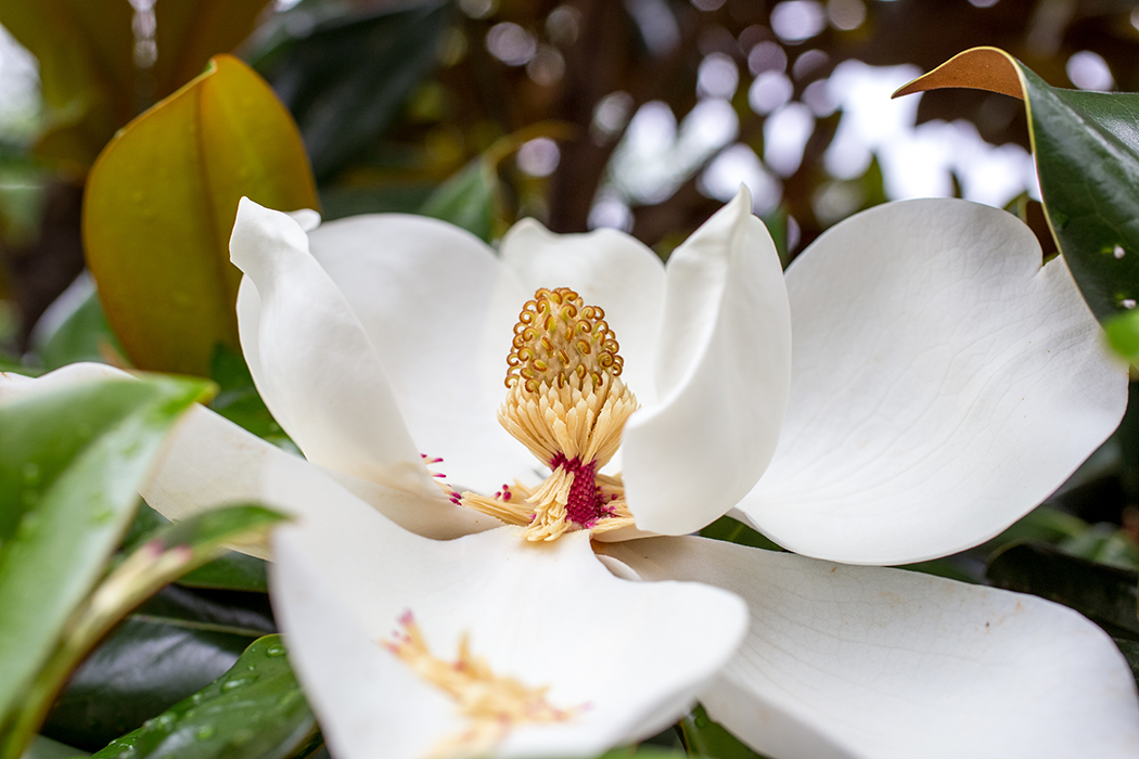 close up photo of a white flower by Jamie Campfield Bates