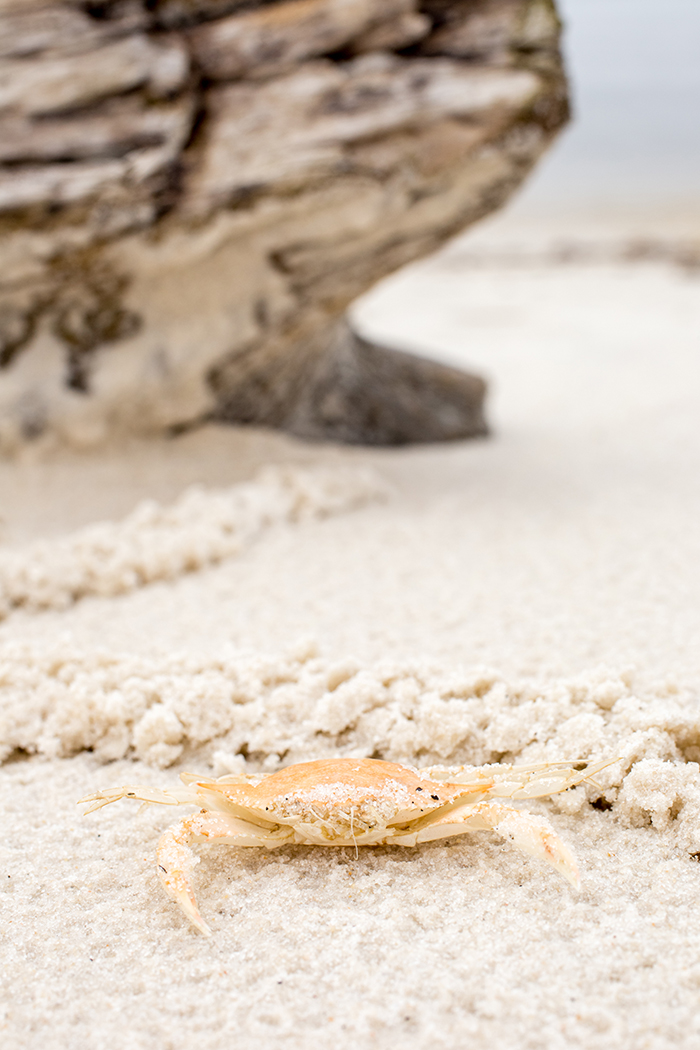 crab on a beach by Jamie Campfield Bates
