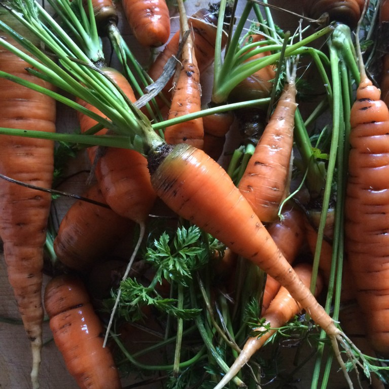 original picture of a pile of carrots by Caroline Jensen