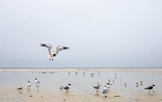 seagulls on a beach by Jamie Campfield Bates