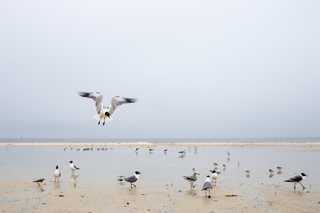 seagulls on a beach by Jamie Campfield Bates