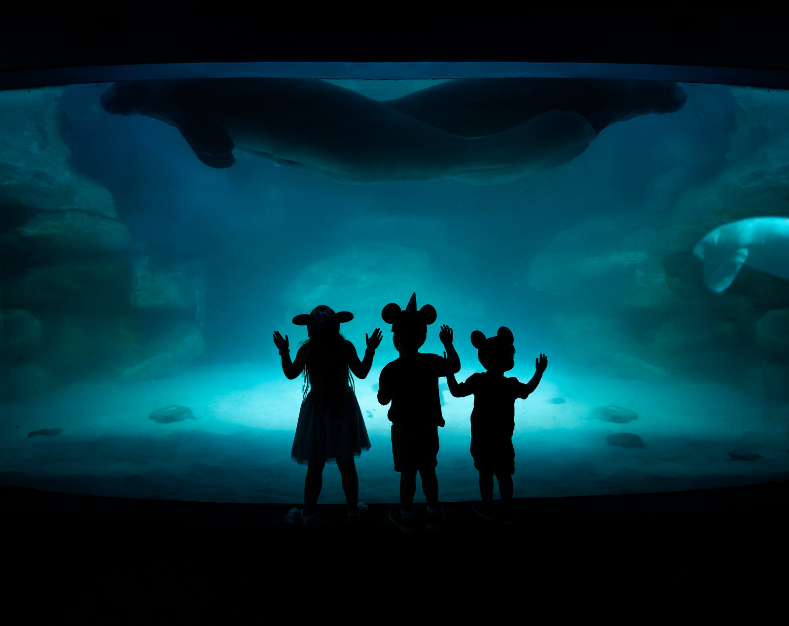 24 Disney photo tips from pro photographers
