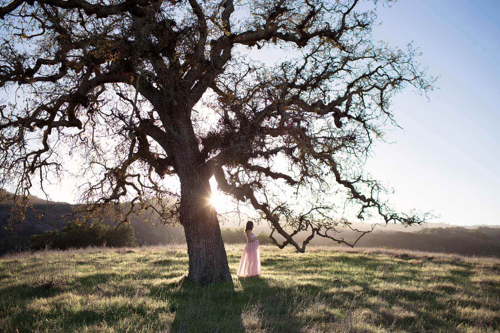 Travel session photo of a pregnant woman under a tree in Cupertino California