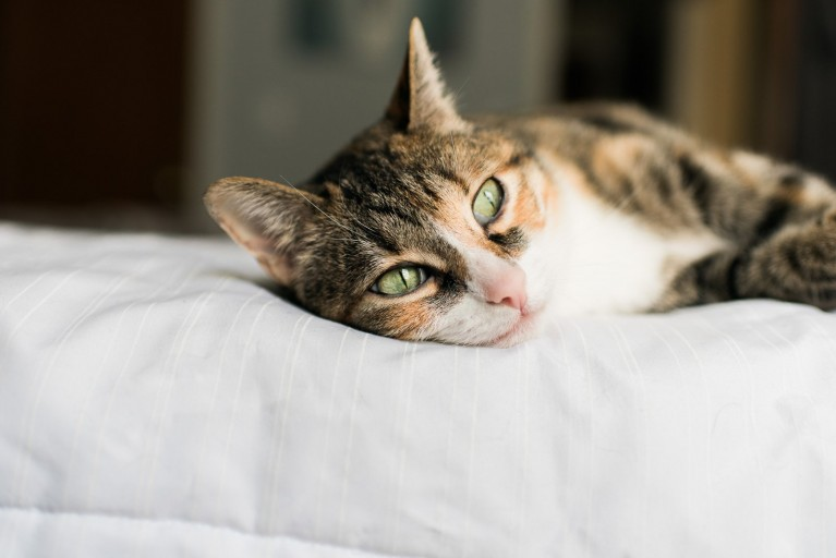 A cat lays in a sunny bedroom, favorite photos at home