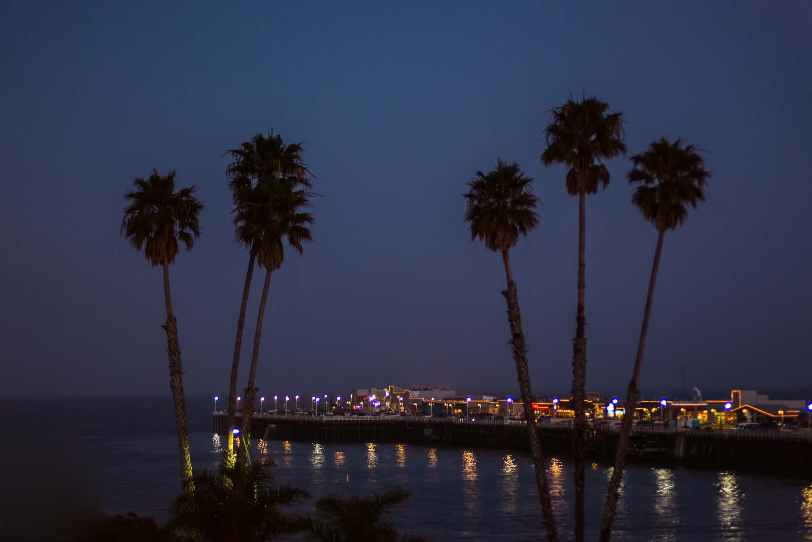 Night photo of palm silhouettes against city lights on an island