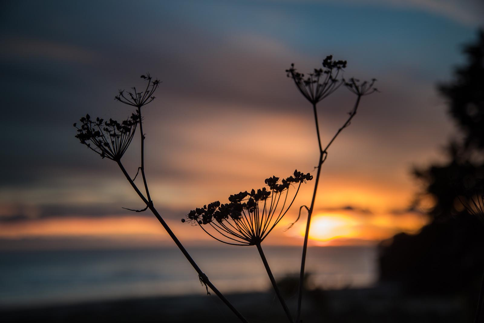 Silhouette of a flower at sunset
