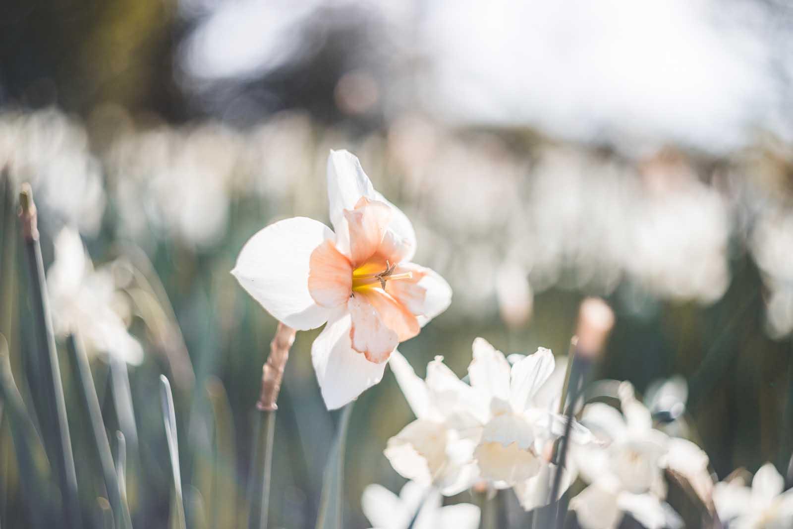 12 Fresh Tips For Exquisite Flower Photos Click Magazine
