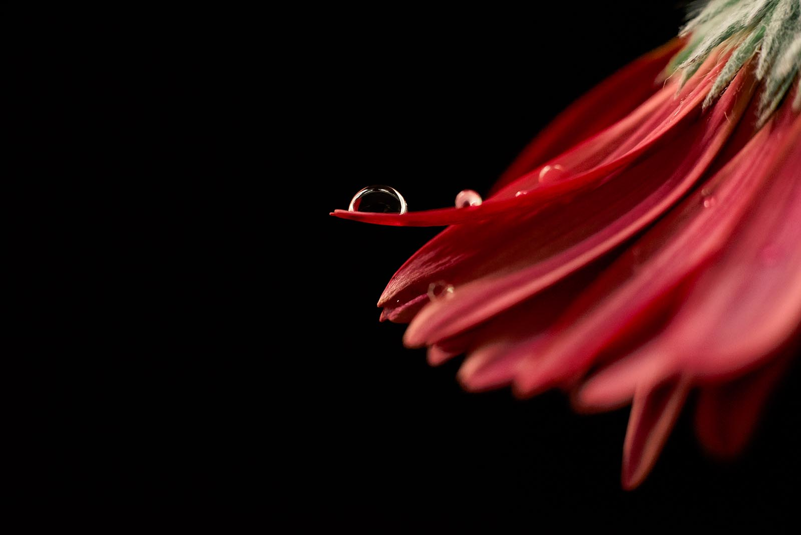 Trying other photography genres makes you a stronger photographer, macro image of red flower.