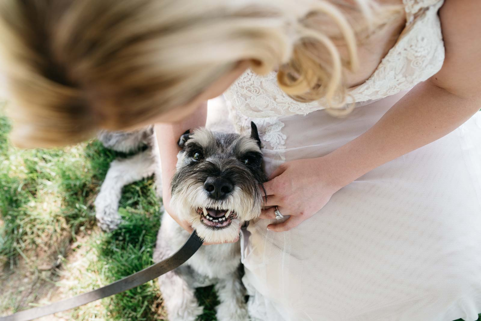 Detail shot of a dog and bride, shot by a second photographer.