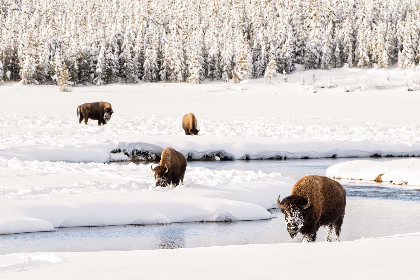 Wildlife photography ethics in America's national parks