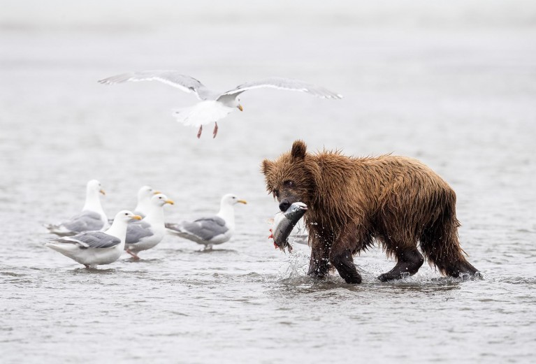 Everything you need to know about wildlife photography ethics