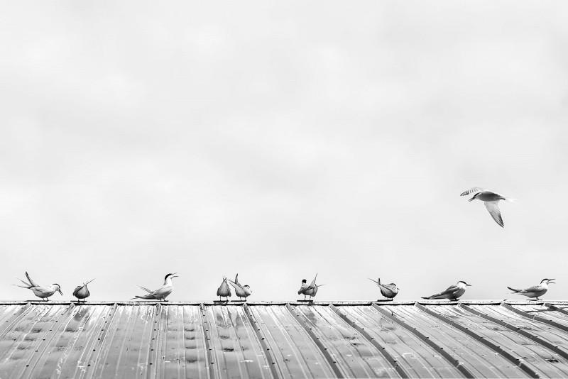 Minimalist photography tips from Dana Walton