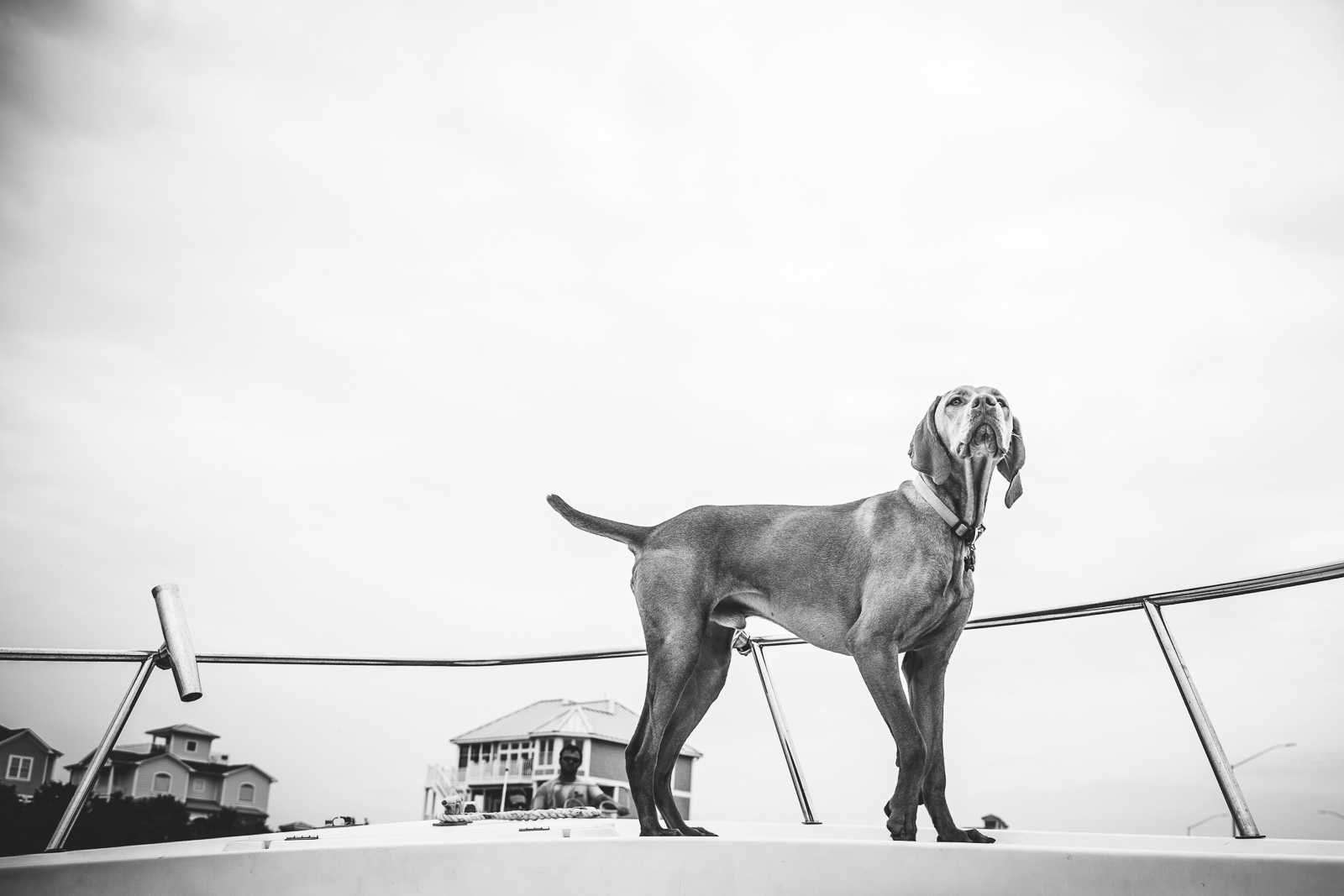 A dog on a boat in a still black and white photo during a video fusion photo session