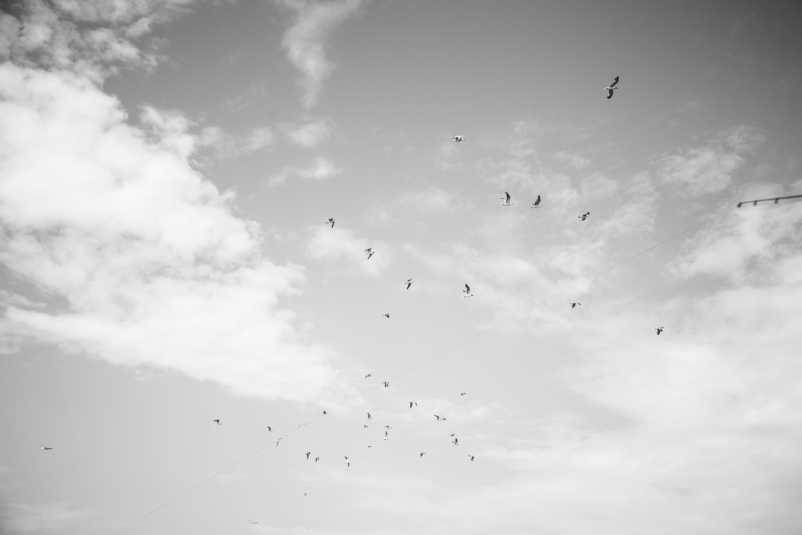 Birds in the sky in a black and white photo