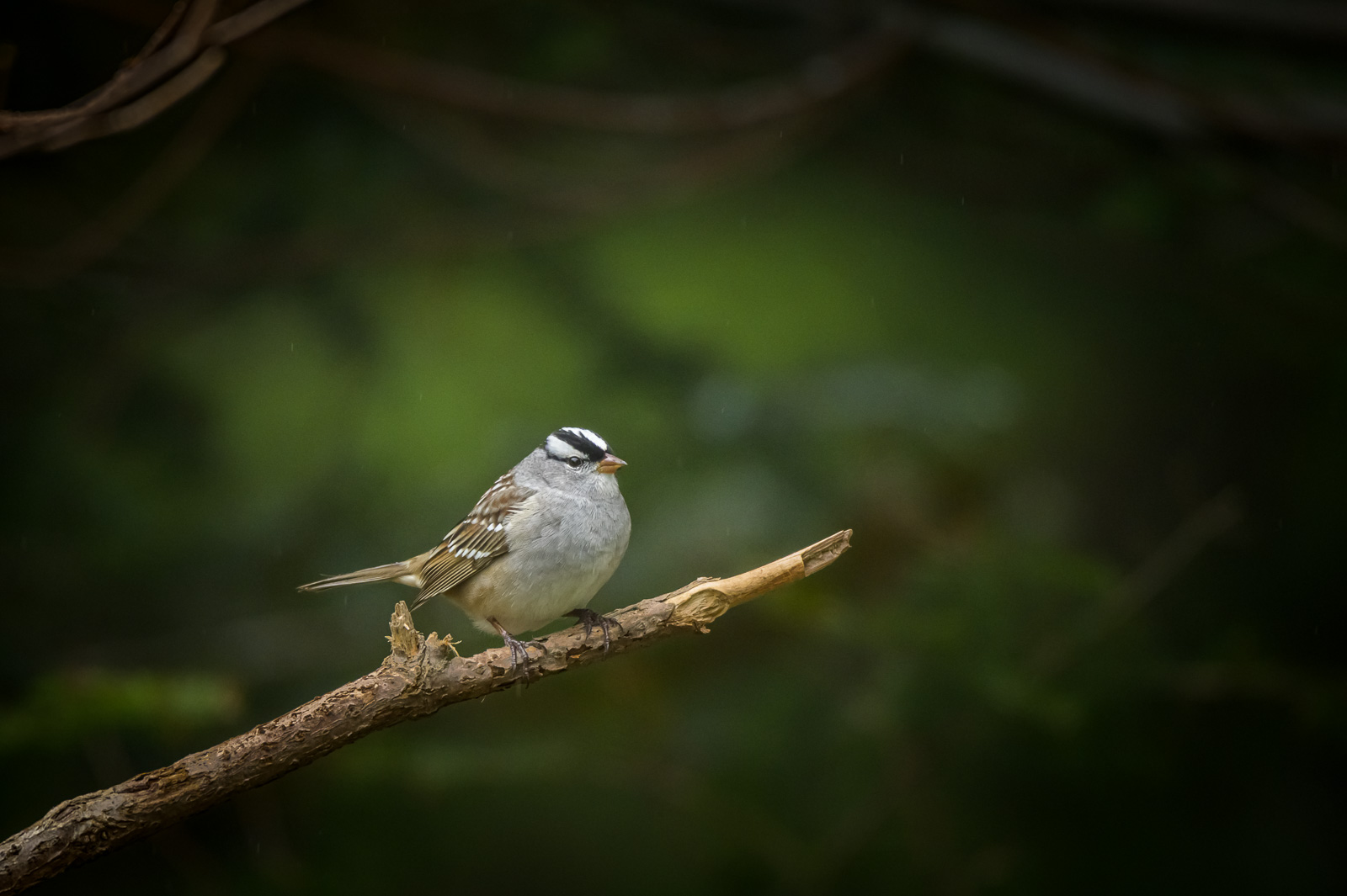 A bird on a branch: What's next for the photographer mom?