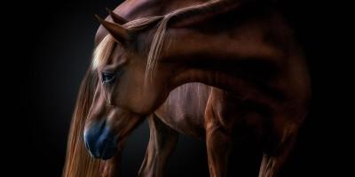 Click Magazine photo contest winner image of horse