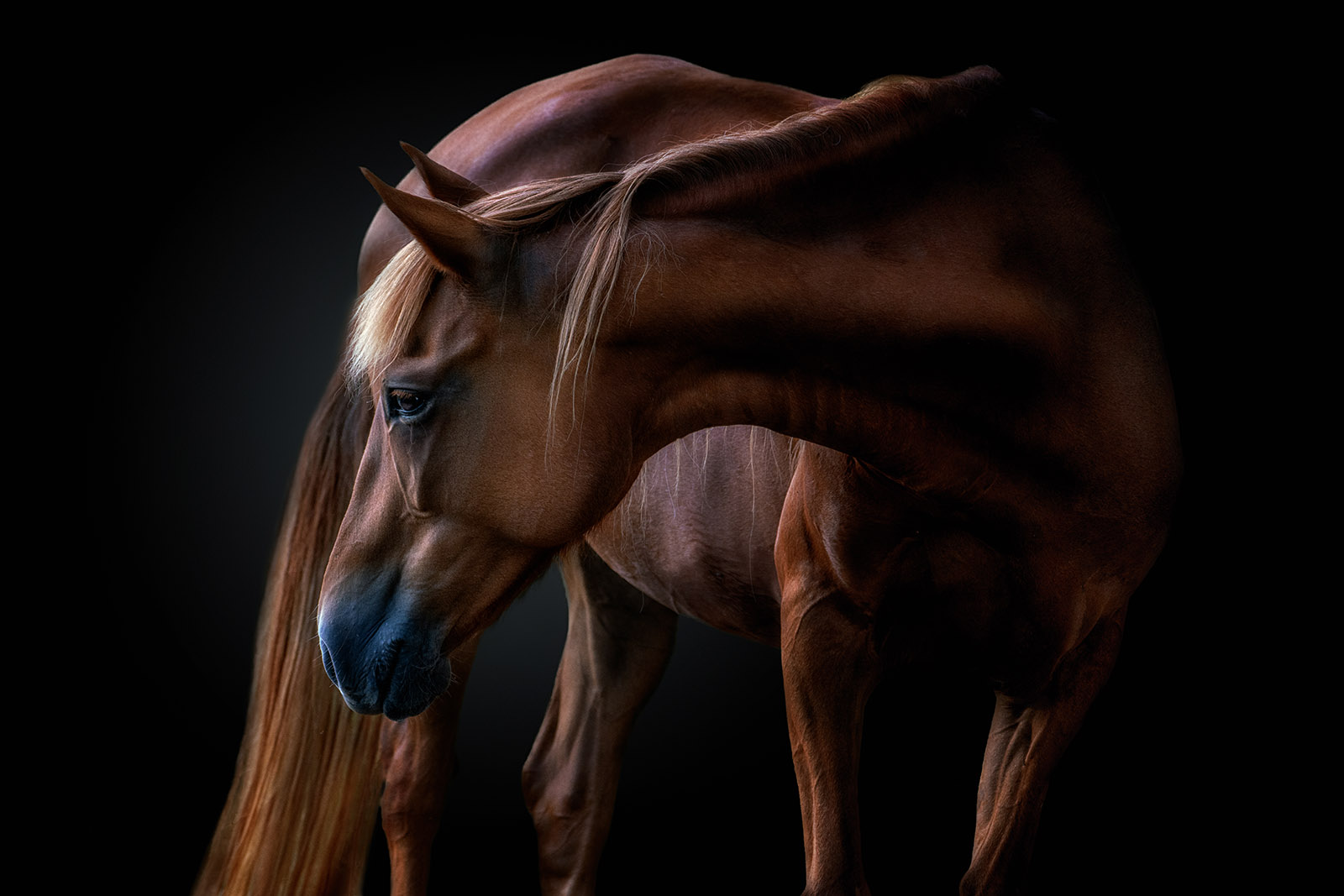 Click Magazine photo contest winner image of horse