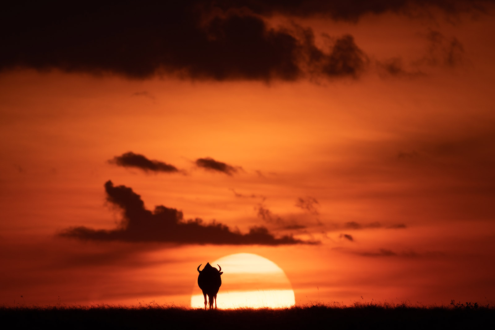 Click photo contest winner wildebeest at sunset