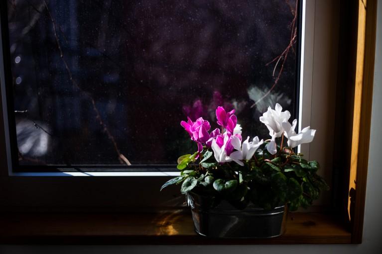 Flowers during coronavirus pandemic