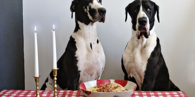 Funny dog photos project by Alison Conklin
