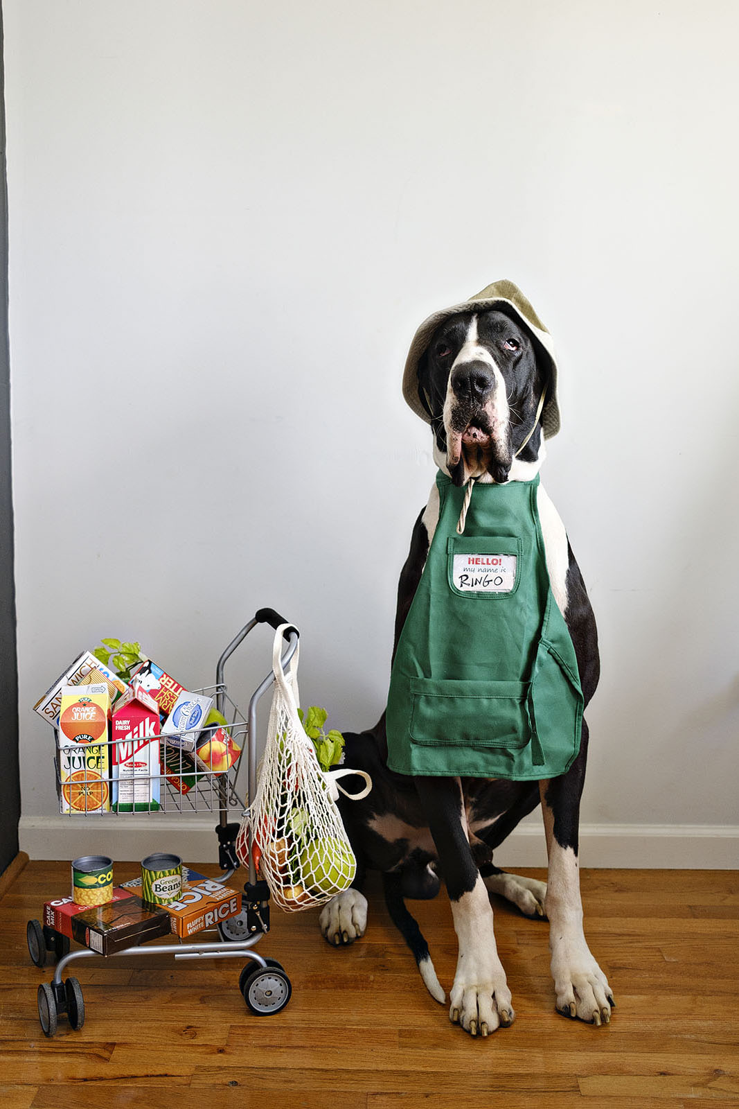 Funny dog photo of a great dane dressed as grocer
