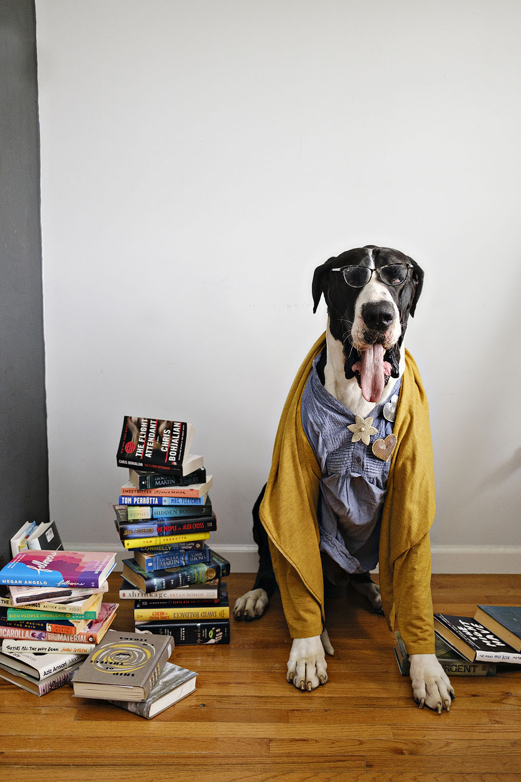 Funny dog photo of a great dane dressed as bookworm
