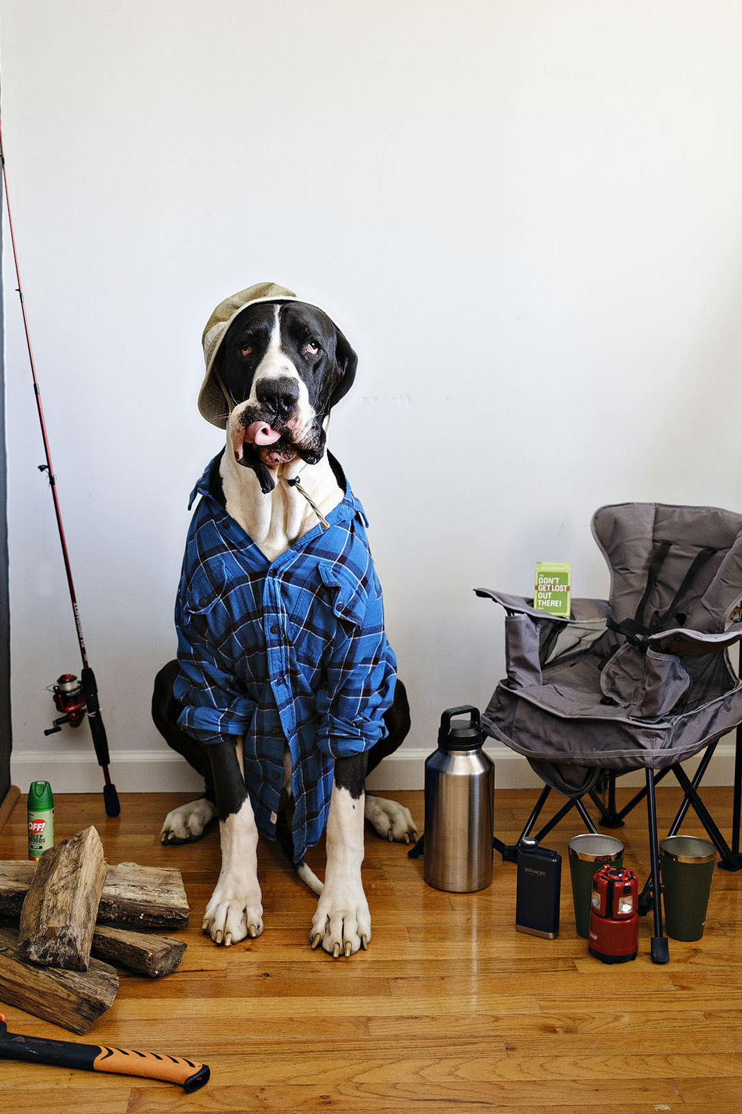 Funny dog photo of a great dane dressed as fisherman