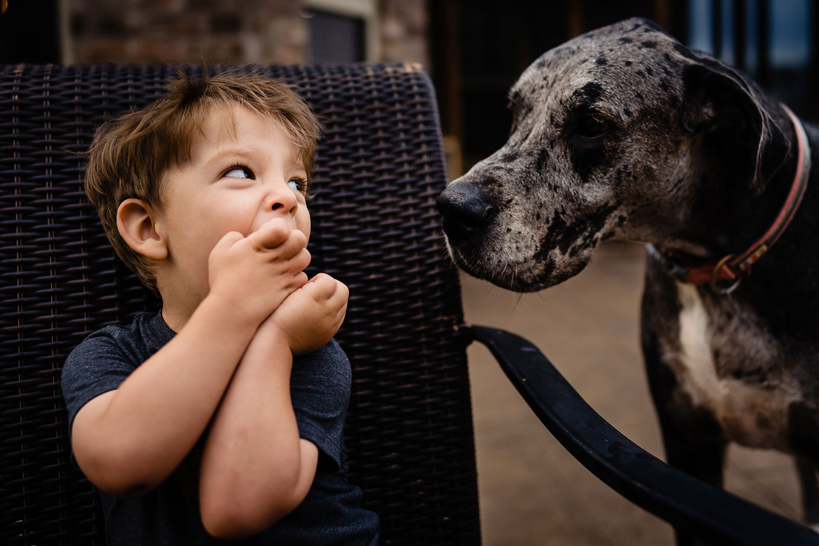 Little boy laughs at his dog during documentary photo session