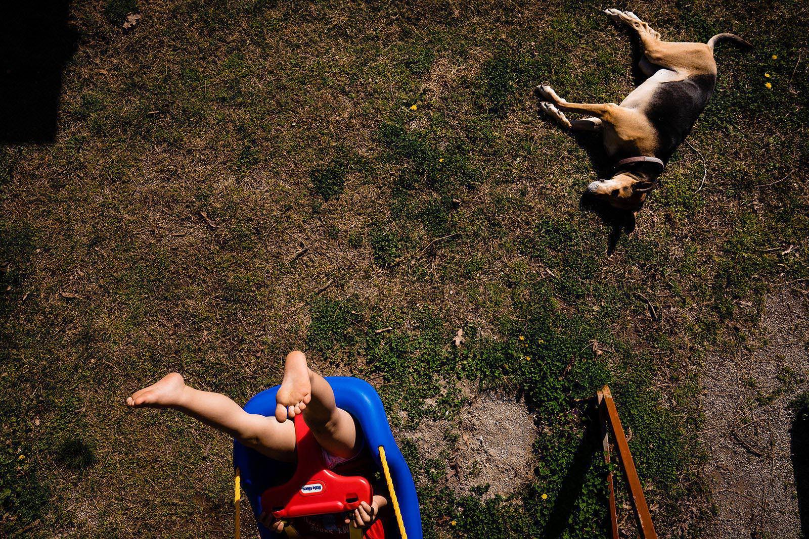 A child swings in yard with dog during Coronavirus self quarantine