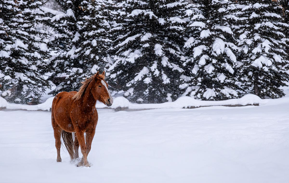 Photo of horse in snow taken with Fujinon XF50-140mm all-purpose zoom lens